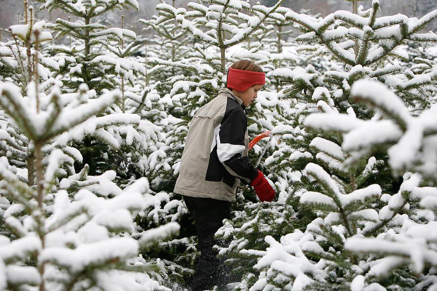 Warum Bio-Weihnachtsbäume aus Bayern gut für Ihre Gesundheit sind