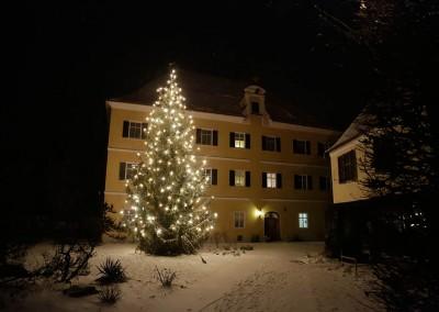 waldweihnacht-mergenthau-050